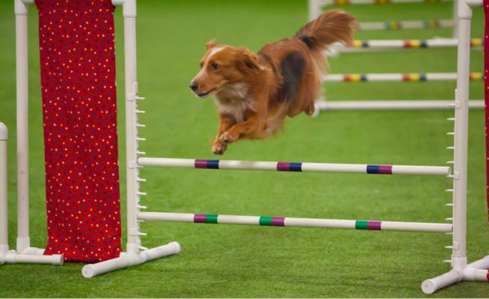 Cloud K Academy Dog Training Naperville Il